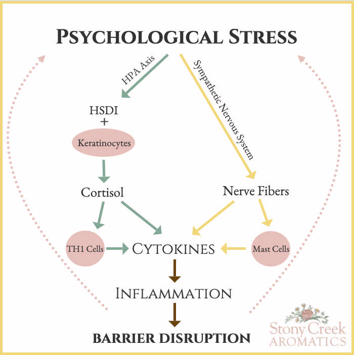 Psychological Stress + Skin Barrier Function